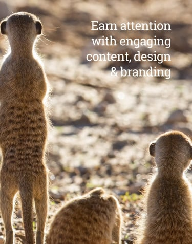 Earn attention with engaging content, design and branding. Image of Meercats representing branding agency, content and graphic design services by Alexanders Digital Marketing