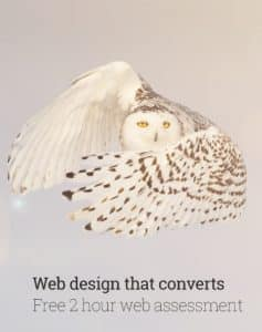 A silent, fast and camouflaged snowy owl illustrating how Christchurch web design company approaches web development