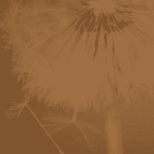 A dandelion representing growing a brand online